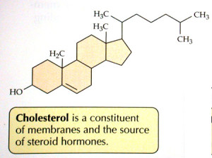 cholesterol medications